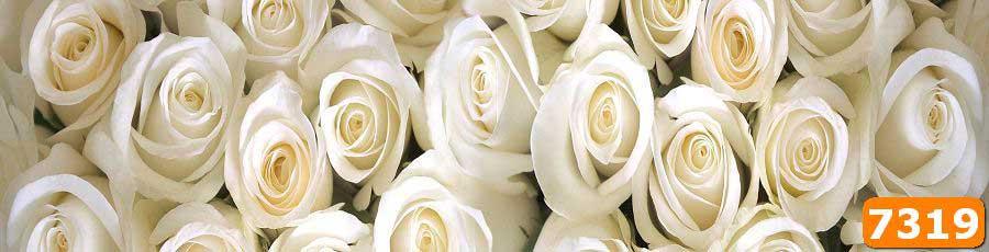 Скинали Белые розы