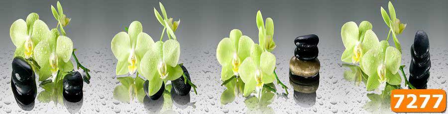 Орхидеи на камнях скинали
